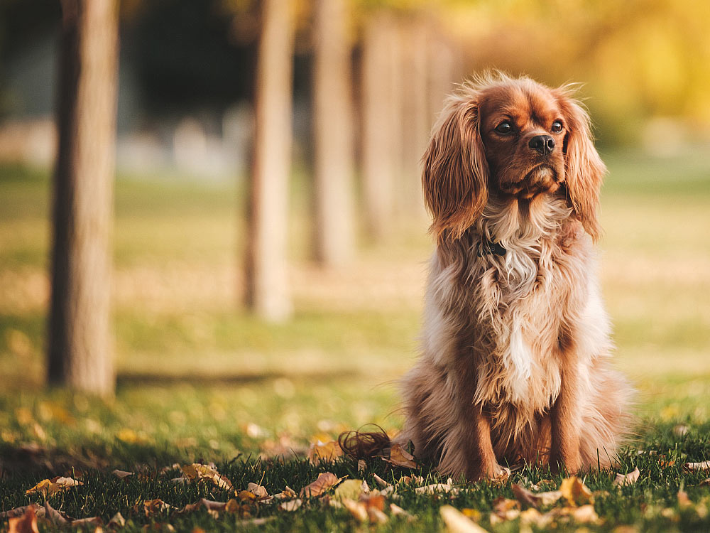 Keeping Your Dog's Coat Healthy